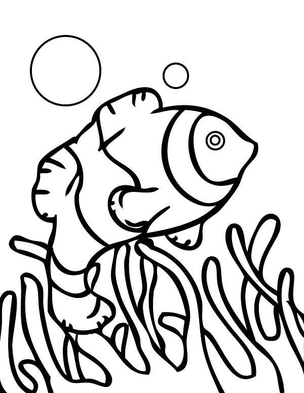 coral reef fish anemonefish - Coral Reef Coloring Pages Kids
