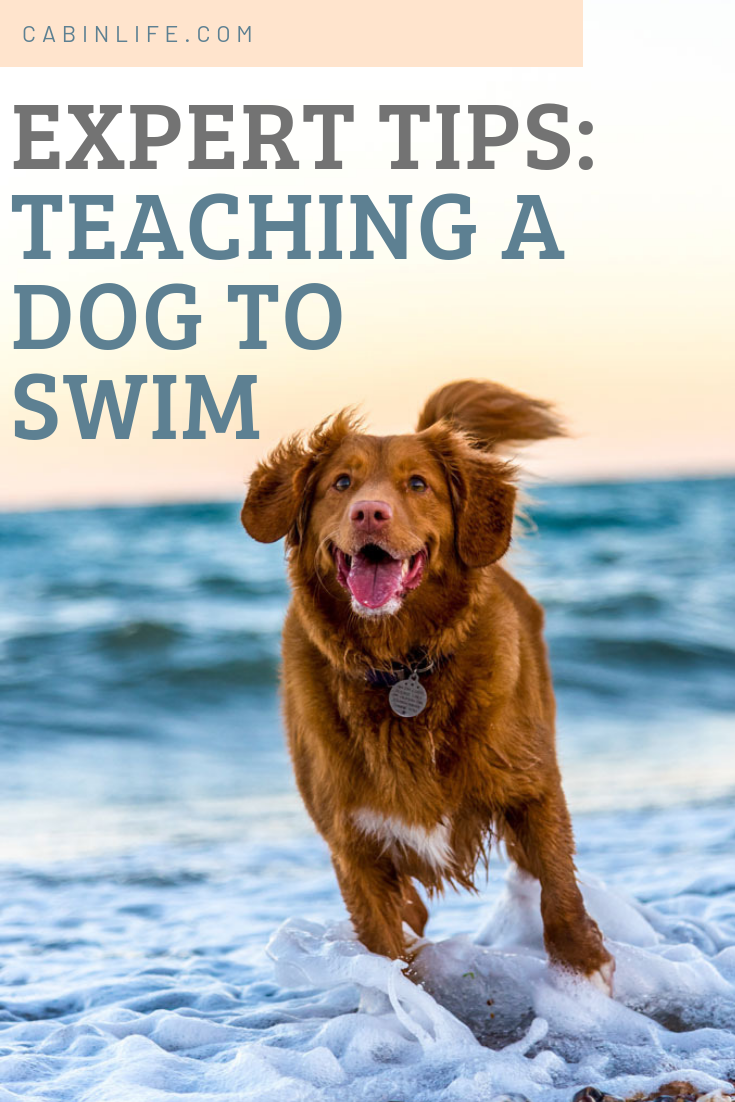 How To Teach A Dog To Swim Dog Insurance Dogs Pets