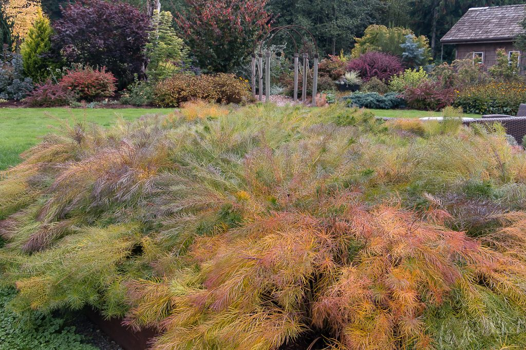 A low maintenance garden that celebrates fall low