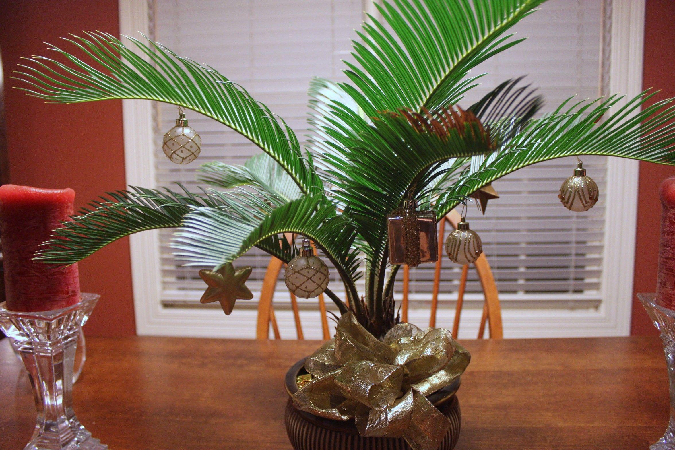 holdiay palm, christmas decorating