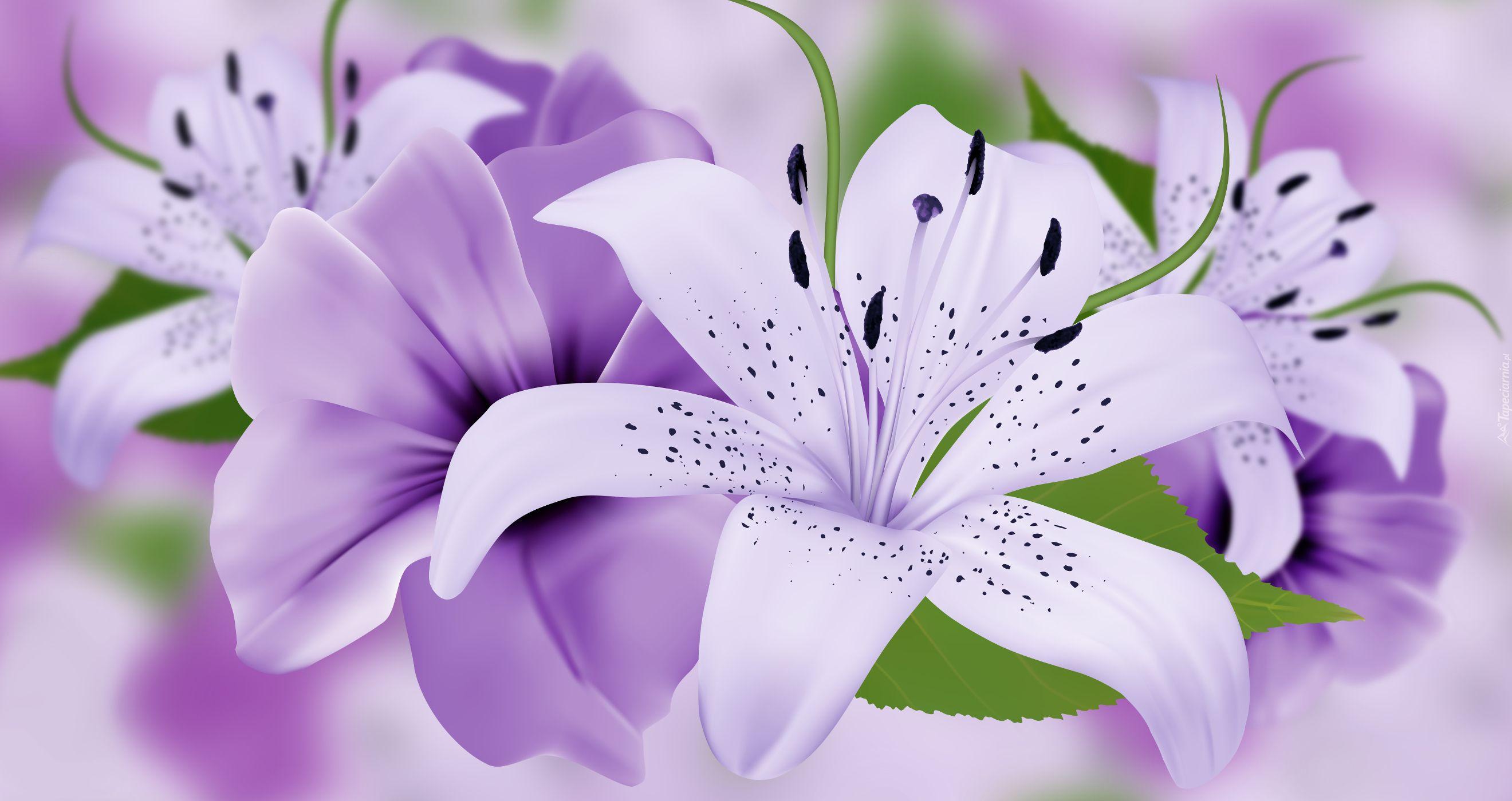 Kwiaty Lilie 2d Flower Desktop Wallpaper Flowers Wallpaper