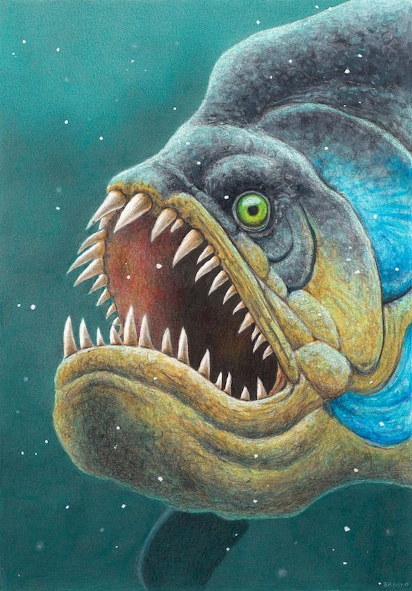 Xiphactinus | Prehistoric animals, Prehistoric creatures ...