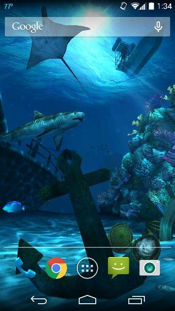 Ocean HD live wallpaper tiger shark and Manta ray