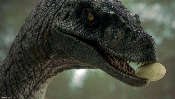 raptor dinosaur jurassic park