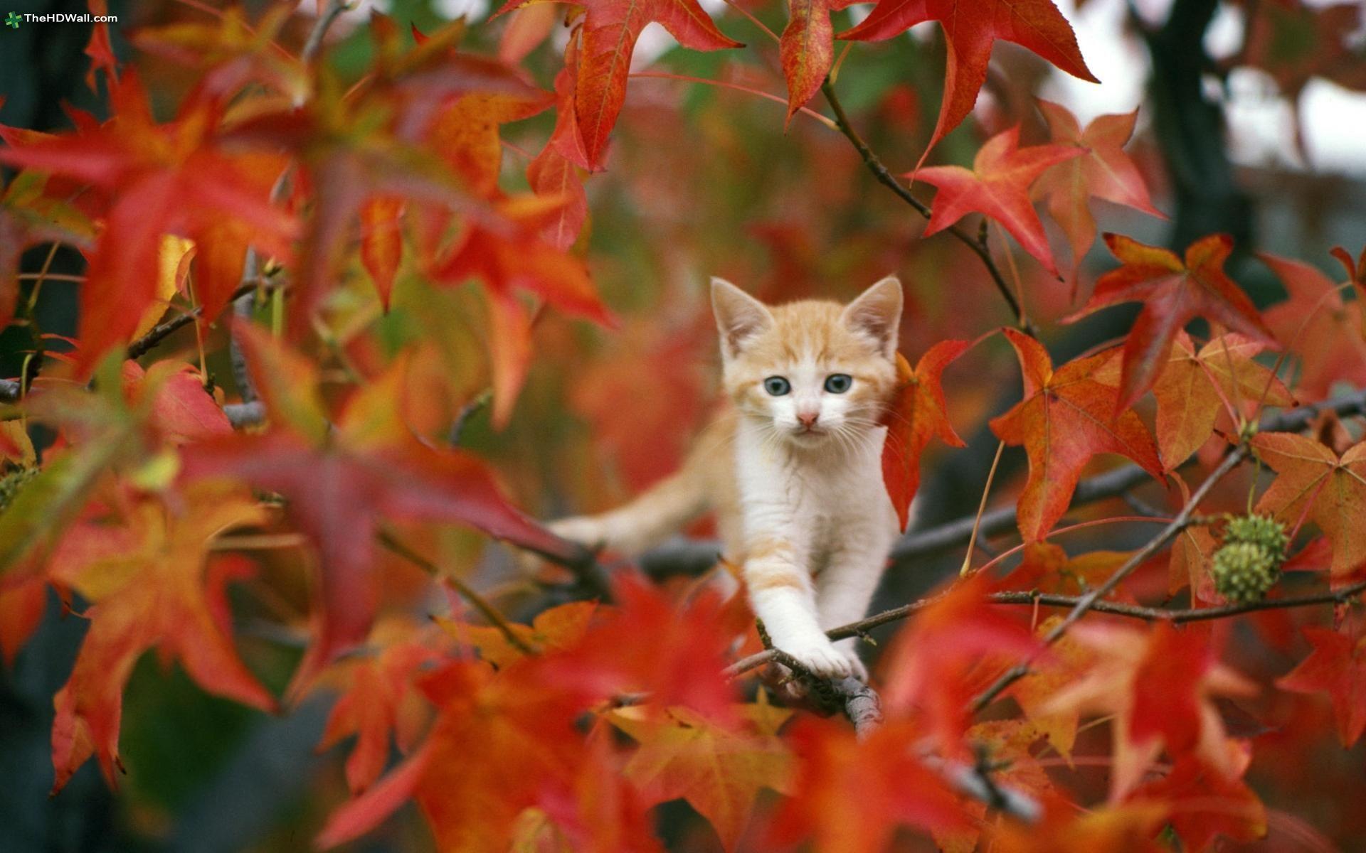 Pets #Fall #Autumn #Leaves #Cats #Kitten #FallFoliage #Puppies #FallColors # Cute #Adorable #Animals | Pretty cats, Cats and kittens, Cute animals