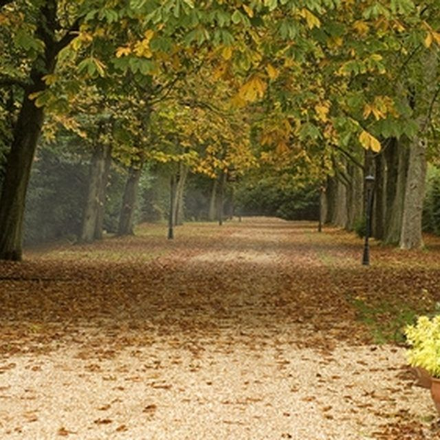 The Best Trees To Line A Long Gravel Driveway