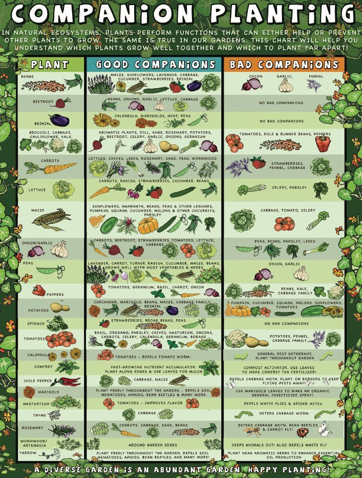Sample Companion Planting Chart Companion Planting Which Plants