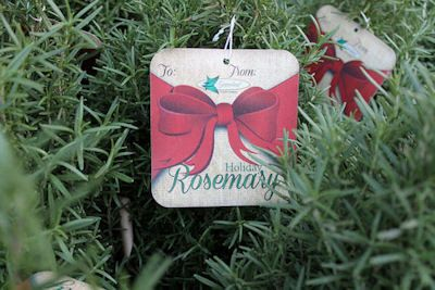The Herb Gardener: Keeping a Rosemary Christmas Tree Alive Till Sprin...