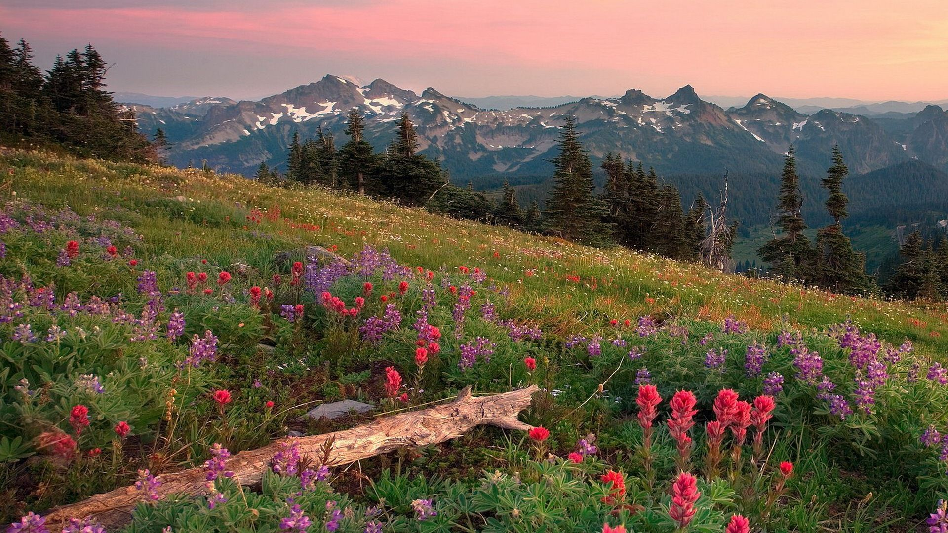 Summer In The Mountains Scenery Wallpaper Landscape Wallpaper Summer Landscape