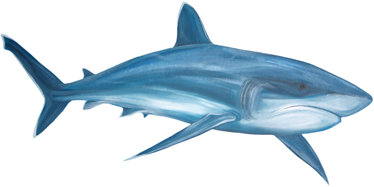 What S A Png File And How Do You Open One Paint Shop Shark Sea Animals