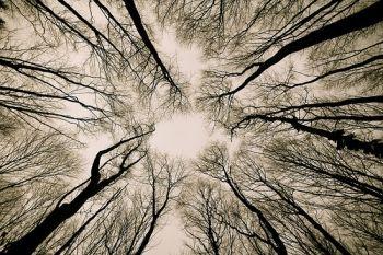 Door de bomen heen omhoog kijken.