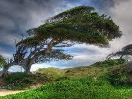 Imagens-árvores em estado natural - Pesquisa Google