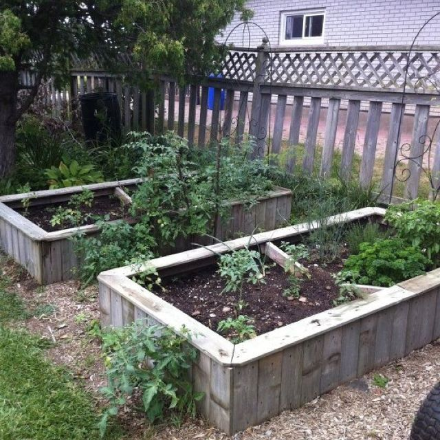 Old fence boards used to make raised garden boxes. Yards