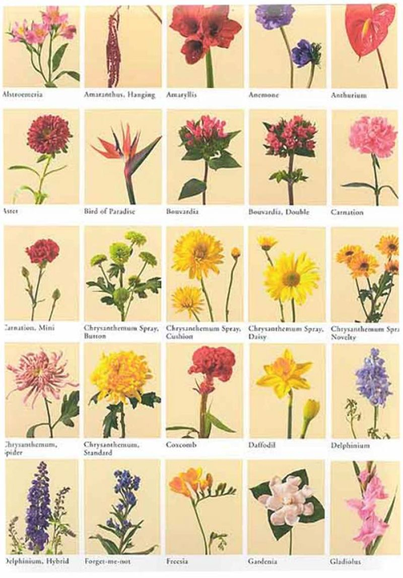 Names Of Flowers Pictures Flower Names With Pictures Flowers