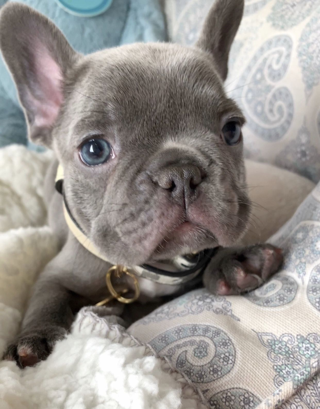 """Up close with Rico 🐶💙"" 📲"