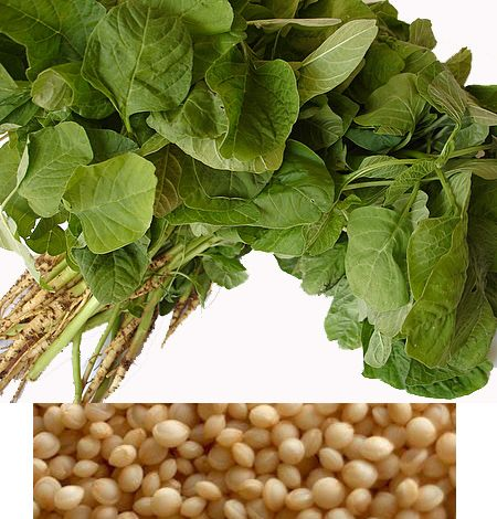 Amaranth only sprouts up in the Spring,so now is the best time to grow it and enjoy this grain.