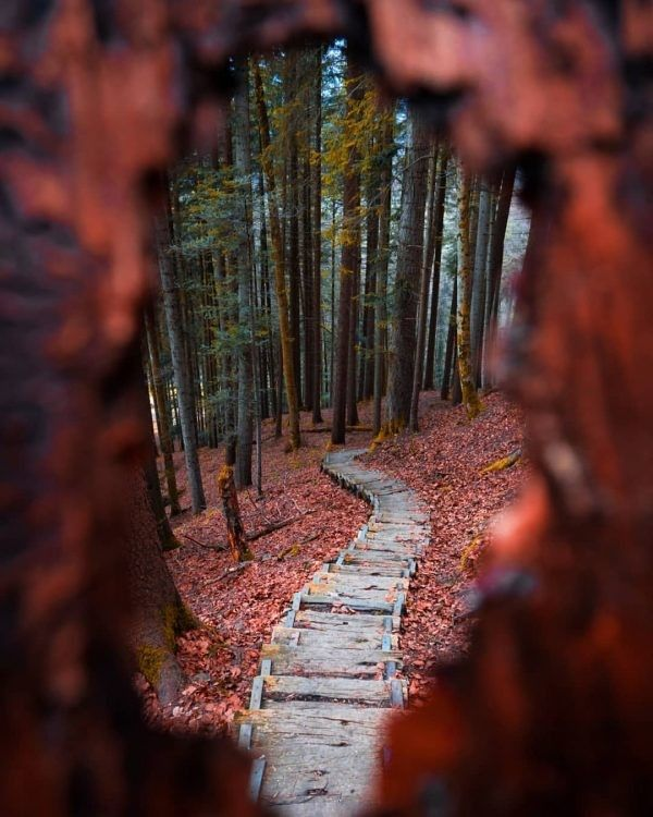 #road #walkway #forest (With Images)