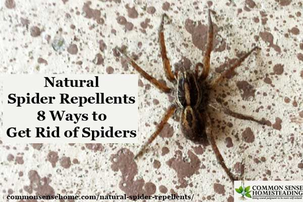 Natural Spider Repellents 8 Ways To Get Rid Of Spiders Natural