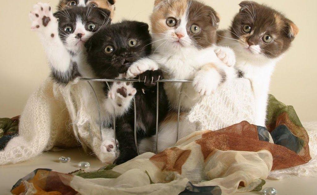 Anak Kucing Kecil Yang Cantik Gambar Anak Kucing Lucu Download Kumpulan Gambar Kucing Yang Mengemaskan Photo Hd Kucing Download 500 Na In 2020 Animals Photo Cats
