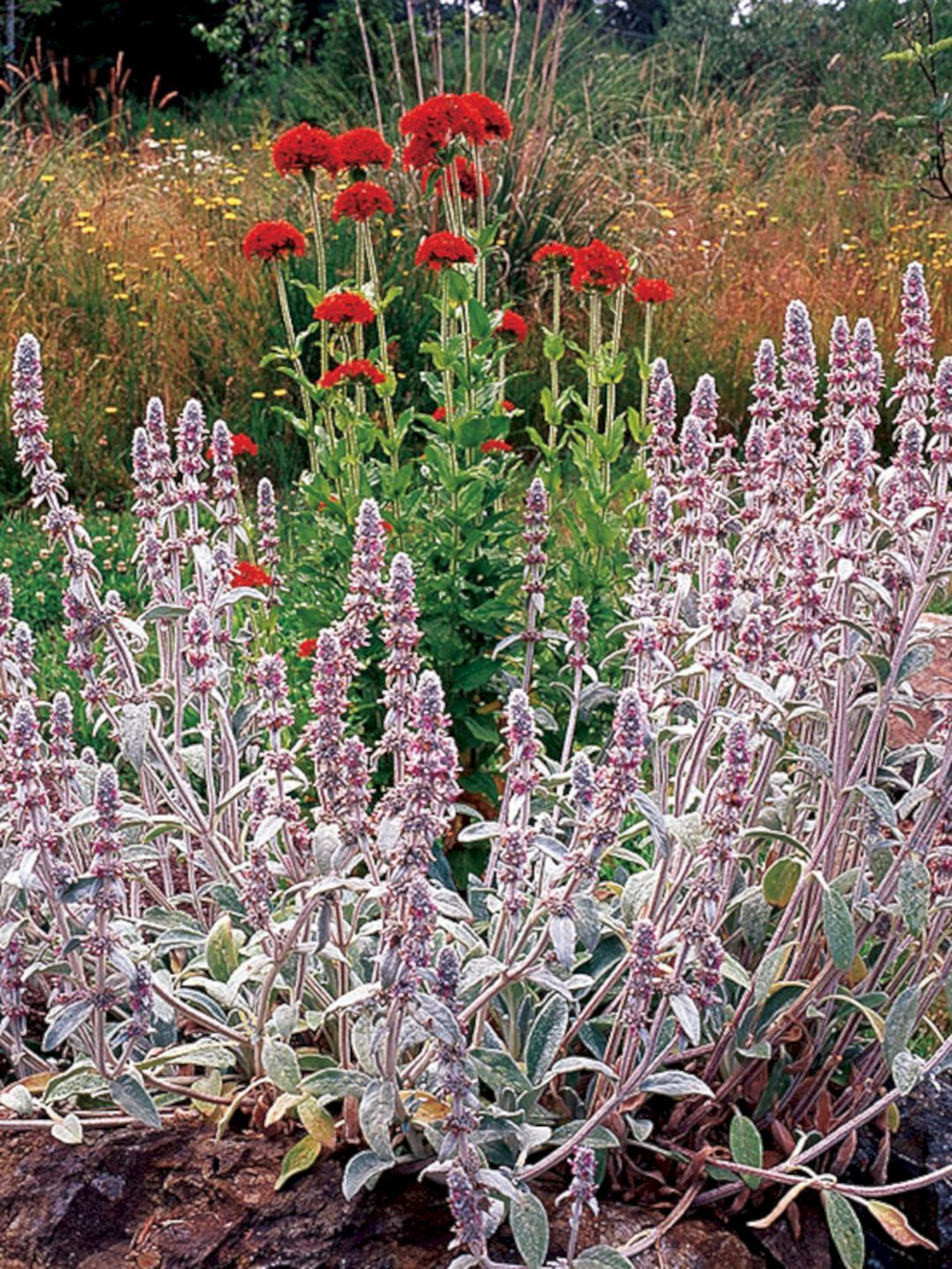 Beautiful Fall Flowers To Plant In Your Garden 78 Best Fall Flower