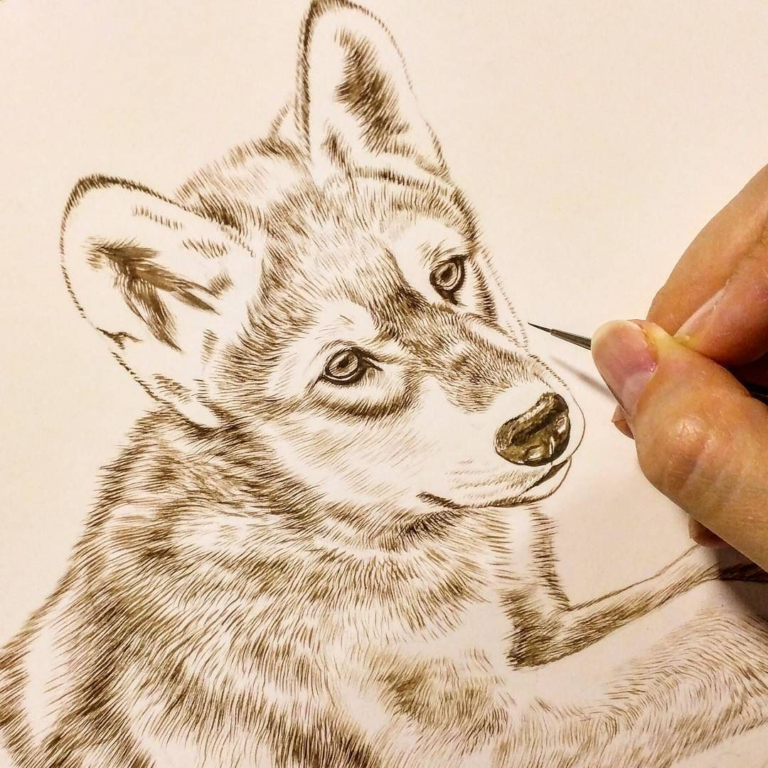 """Wolf painting in progress 8"""" x 10"""" watercolor on board Rebecca Latham  #wildlife…"""