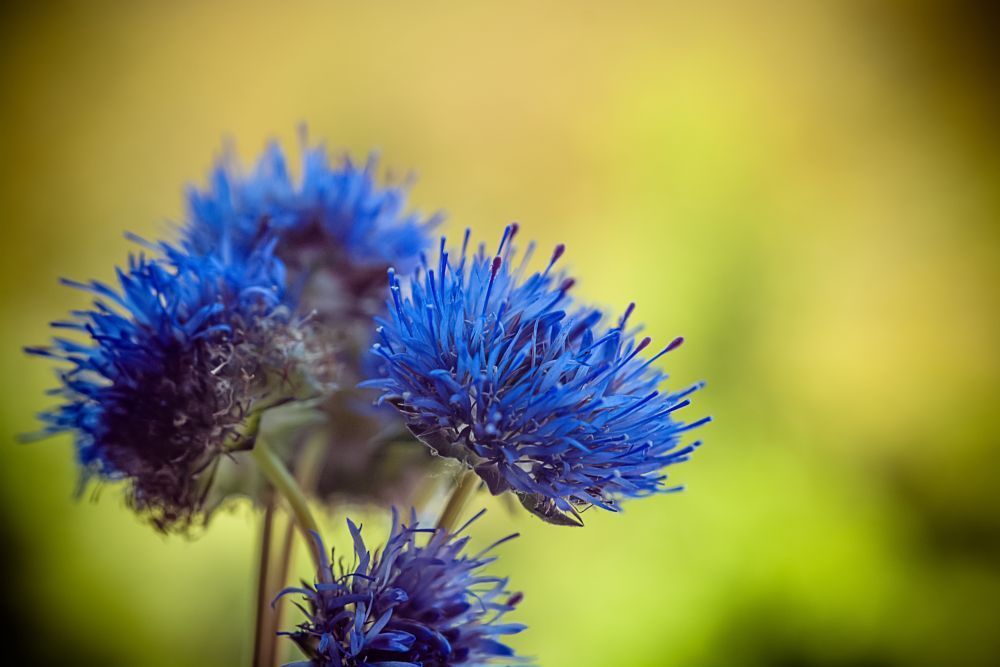 Blue flowers by ABMC