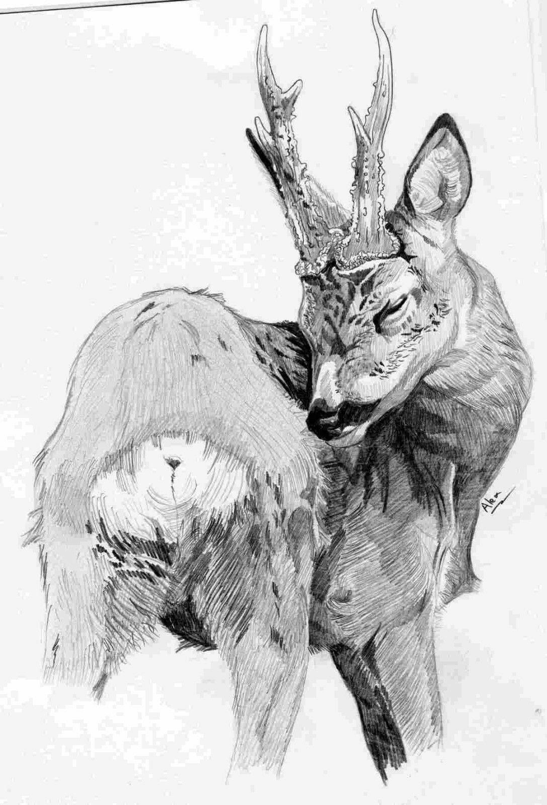 Pin Di Simone Rucellai Su Caccia Tiro Disegnare Animali Cervo E