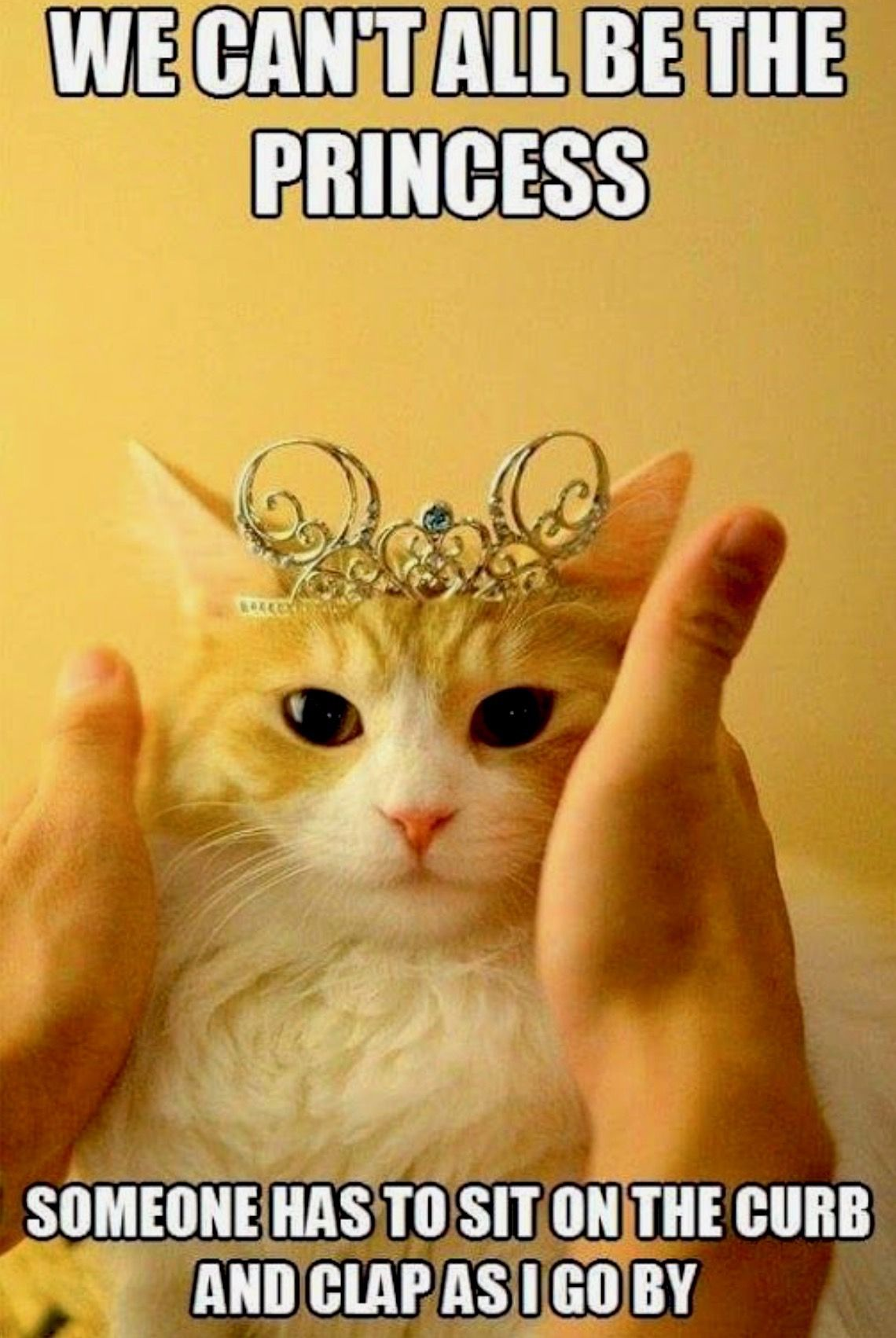 Pin by karen truitt on funnies funny animals funny cats - Princesse kitty ...
