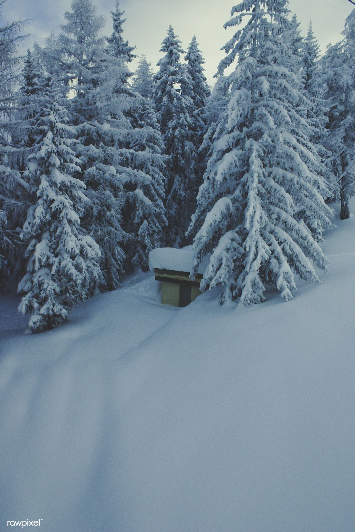Winter Mountain Landscape In The Alps Free Image By Rawpixel Com Winter Mountain Winter Pictures Snowy Pictures