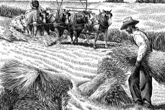 Old Time Wheat Harvest