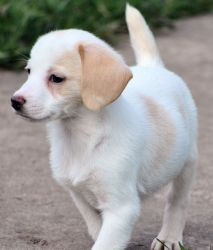 Adopt Carly On Dogs Chihuahua Dogs Cute Creatures