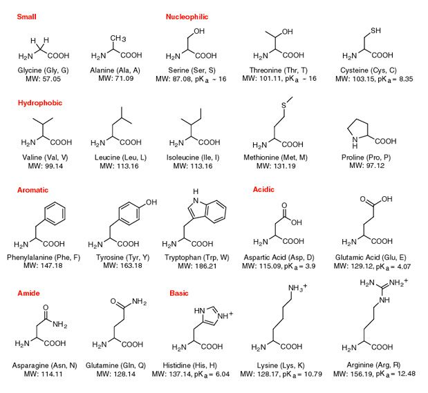 Amino Acid Structures. | Mcat | Pinterest | School, Chemistry And Math