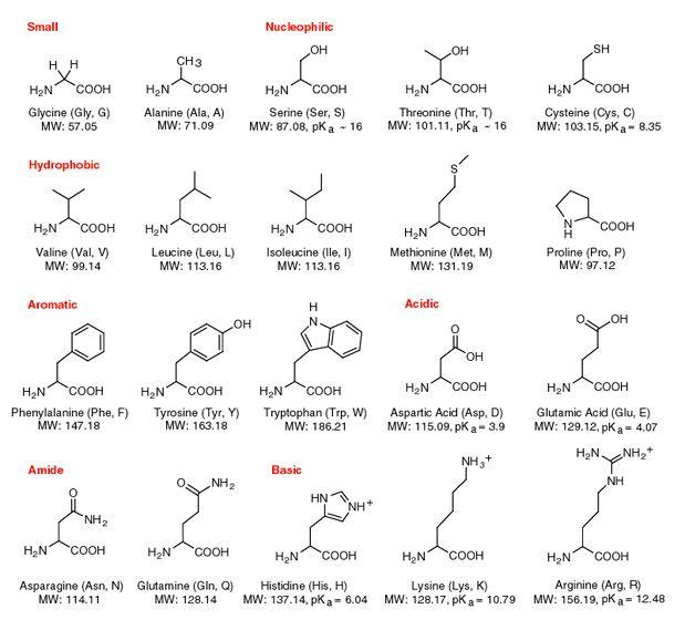 Amino acid structures also mcat pinterest acids rh