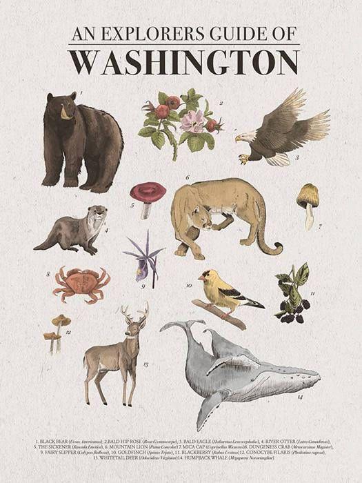 Washington State Poster | Pacific Northwest Hiking Wall Art | Washington State Wall Art | Pacific Northwest Poster | Washington Hiking Guide