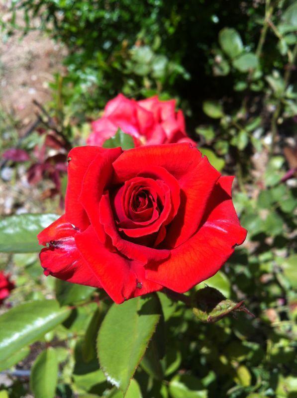 flower by hsndrmş