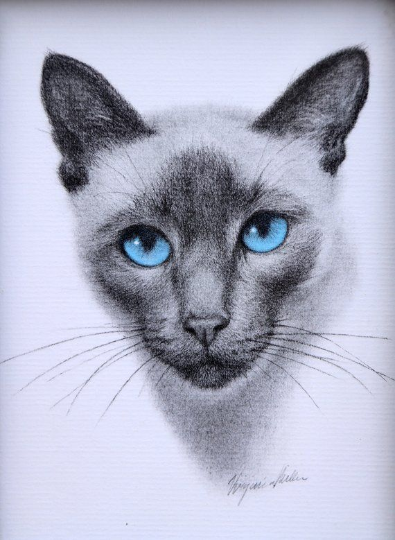 Siamese Cat Art Framed Virginia Miller Art Print Cat Lover