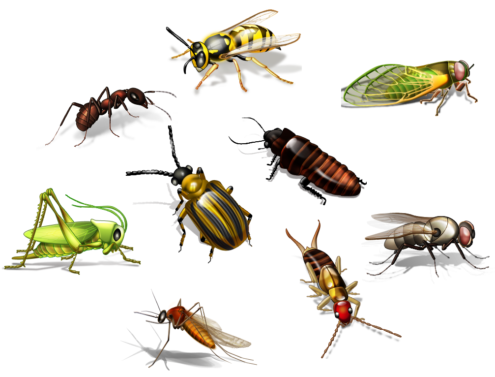 Mosquito, cockroach, bed bug or termite pest control is