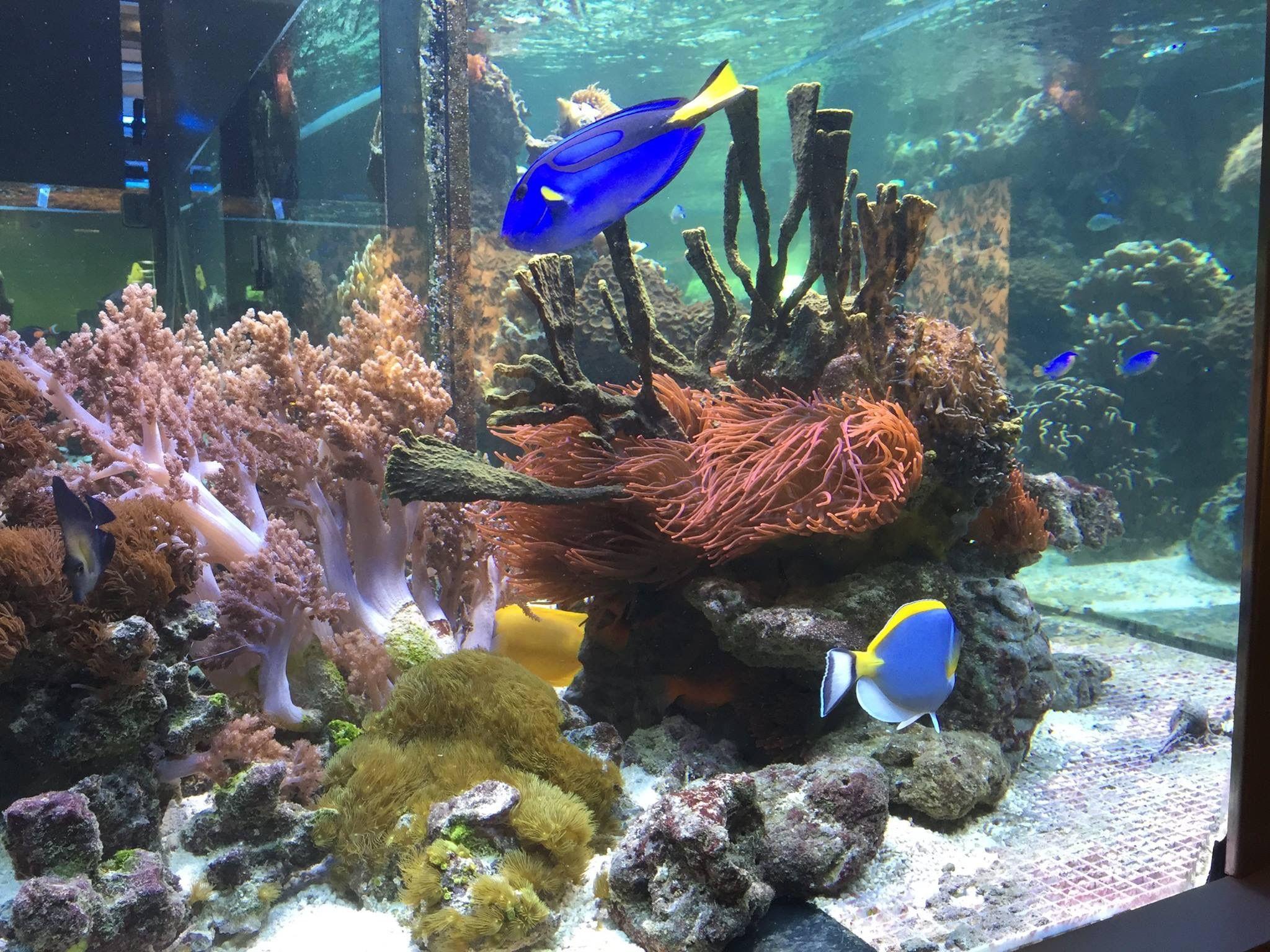 Pin by zoe catherine on aquariums pinterest fish tanks