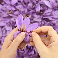 NaturalEyeCare : Saffron Helps Macular Degeneration in Five Research Studies: Several stud https://t.co/R4PjbvbfCB) https://t.co/MpeBHCDwhA