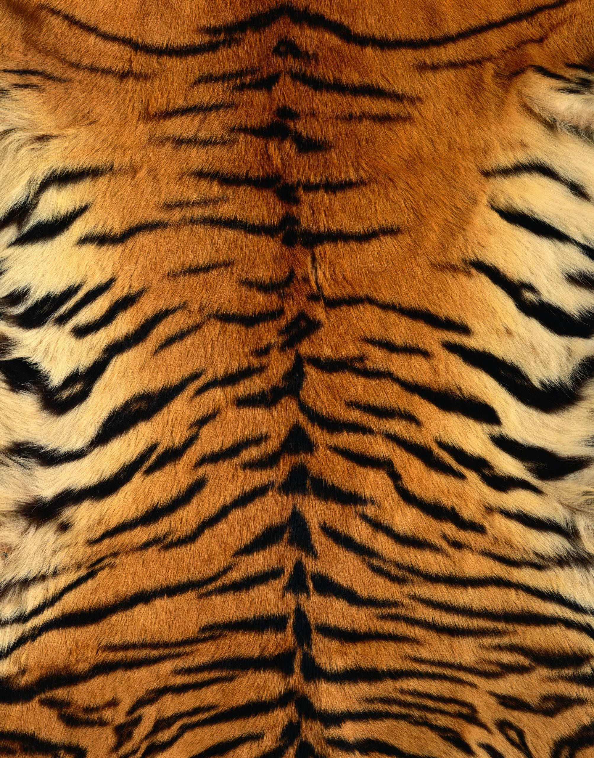 Tiger Skin Google Search Doodle Reference Patterns