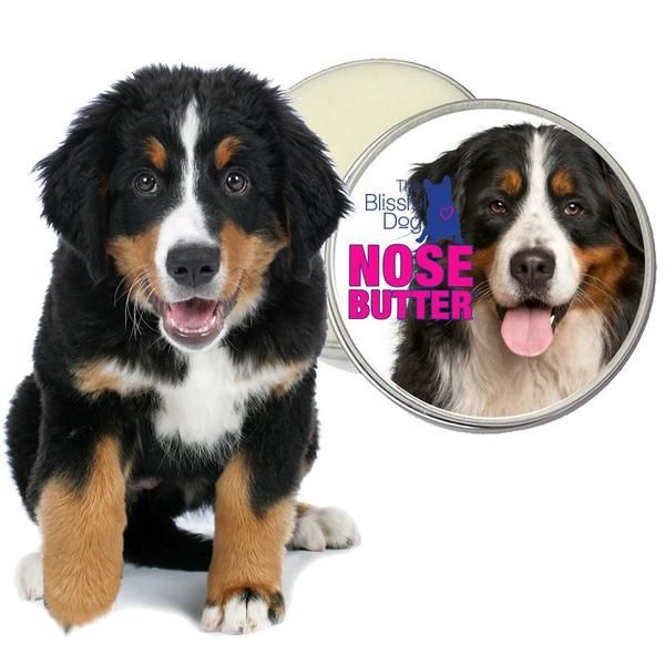 Bernese Mountain Dog Nose Butter Dog Nose Dogs Dry Nose