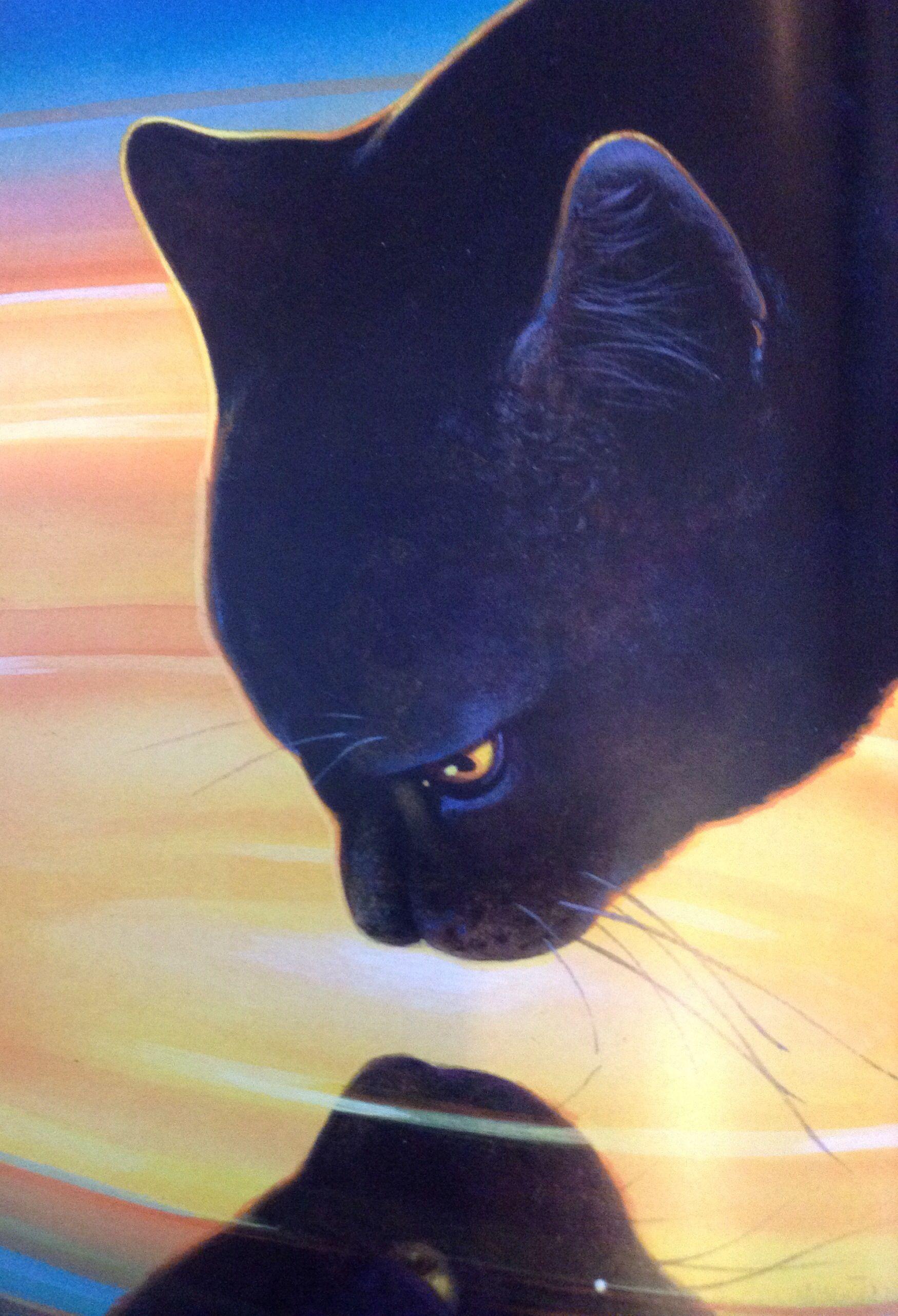 Hollyleaf I Wish She Didnt Die Warrior CatsCat