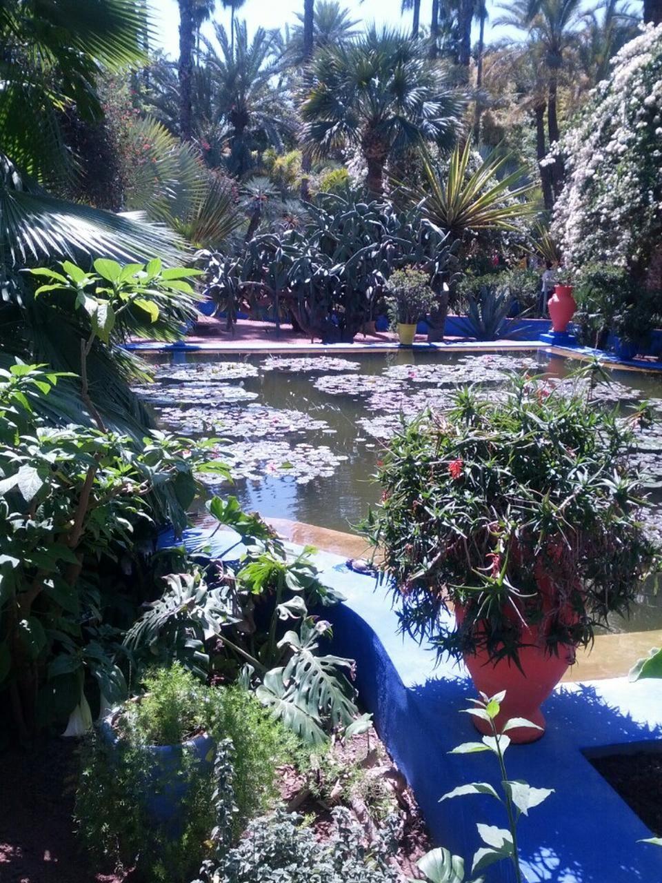 Jardin De Majorelle ديقة ماجوريل Marrakech Morocco Garden