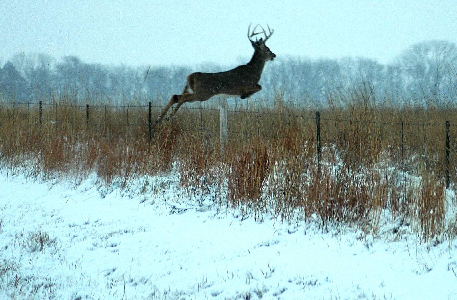 Whitetail deer wallpaper whitetail deer backgrounds for pc hd hd whitetail deer wallpaper whitetail deer backgrounds for pc hd voltagebd Image collections