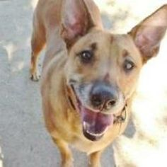 74671ae3d72bff9906596bedb9d24d04 Jpg 236 236 Shepherd Dog Mix