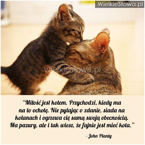 Miłość Jest Kotem Przychodzi Planty John Kot