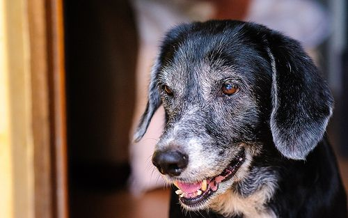 Dog Portrait - Smiling Abby