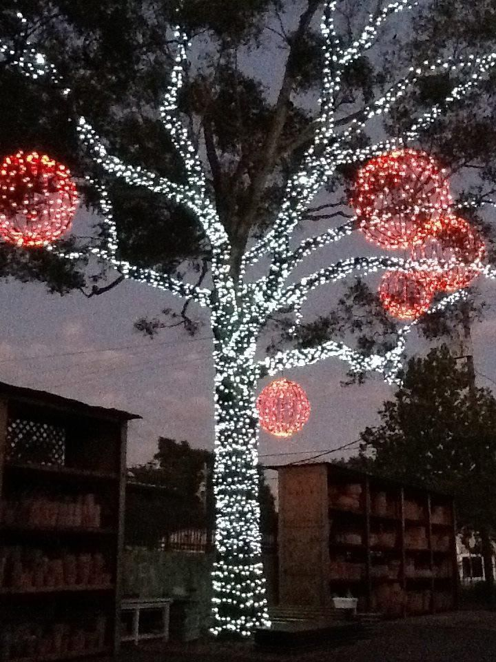 Great Christmas Lighting Idea From A Fellow Pinner. I Would Love To Wrap  Lights Around A Tree Like This.