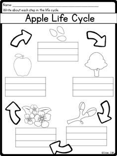 Fall Life Cycles- Covers Apple Life Cycle and Pumpkin Life
