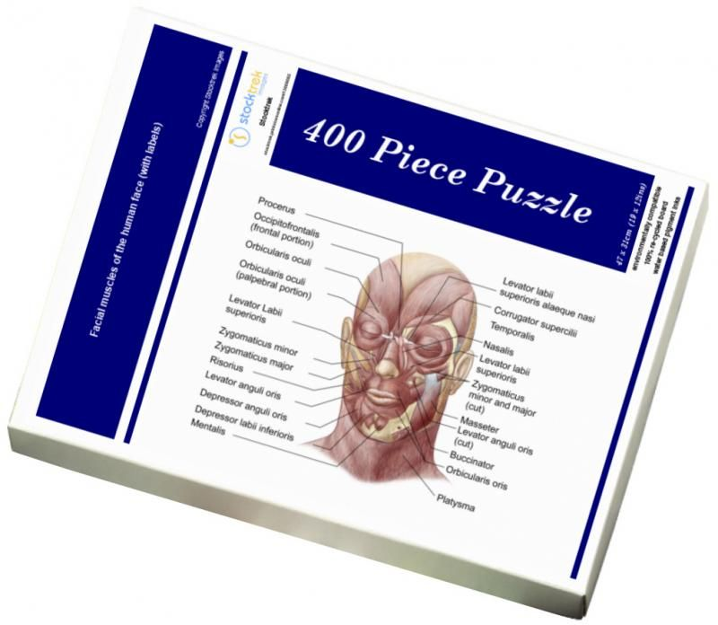 29+ 400 Piece Puzzle. Facial muscles of the human face with labels